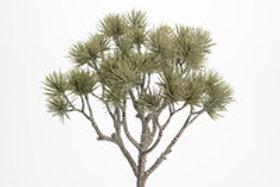 Arbusto com 28 cm de altura