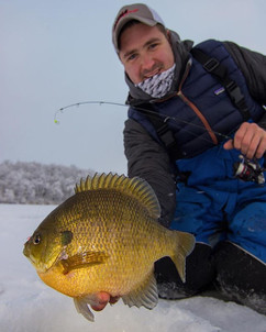 Perky-Pie the bluegill. First ice is a m