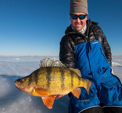 Overweight yellow perch welcome a happy