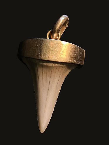 Colgante diente M gold
