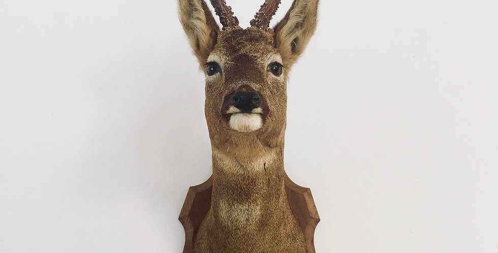 Vintage Taxidermy Deers Head Mounted to Wood Plaque Shield