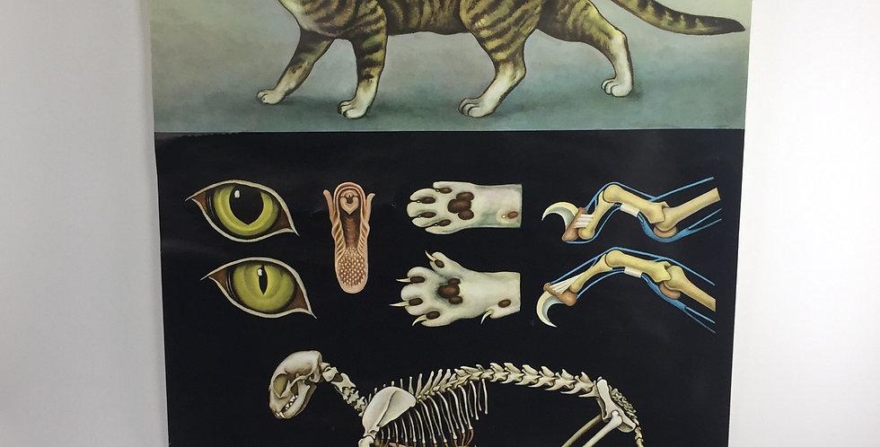 Jung-Koch-Quentell Educational Chart - Cat