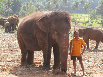 Srí Lanka 2013 - Deset vůní Srí Lanky