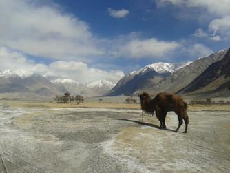 Indie - Kašmír 2014 - Velká návštěva Malého Tibetu