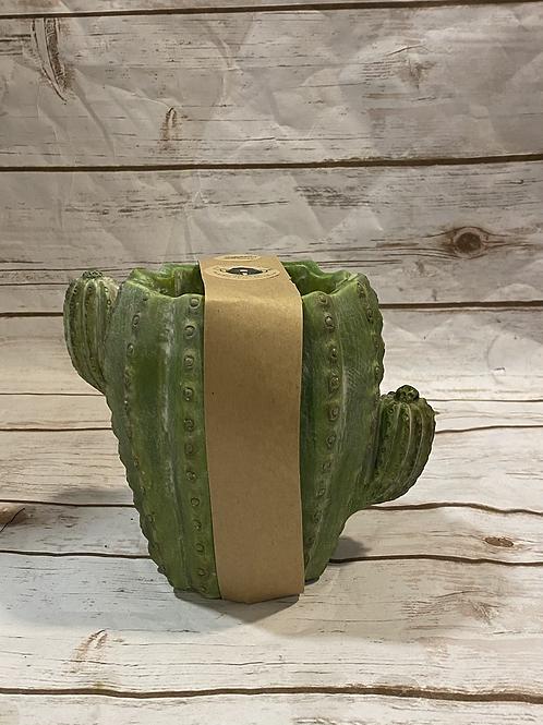 Large Barrel Cactus
