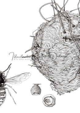 Wasp and wasp nests