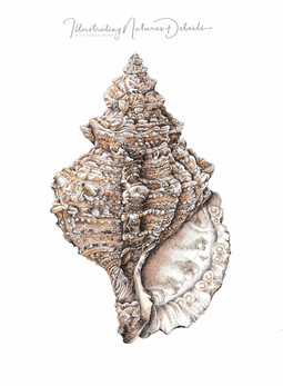 Helicoid shell