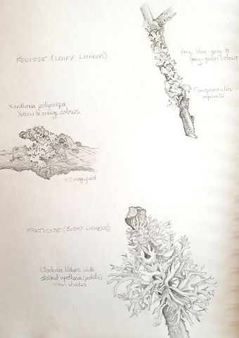 Lichen Sketchbook Page