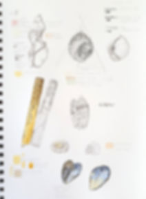 Shell sketchbook page