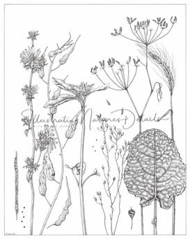 Field margin plants