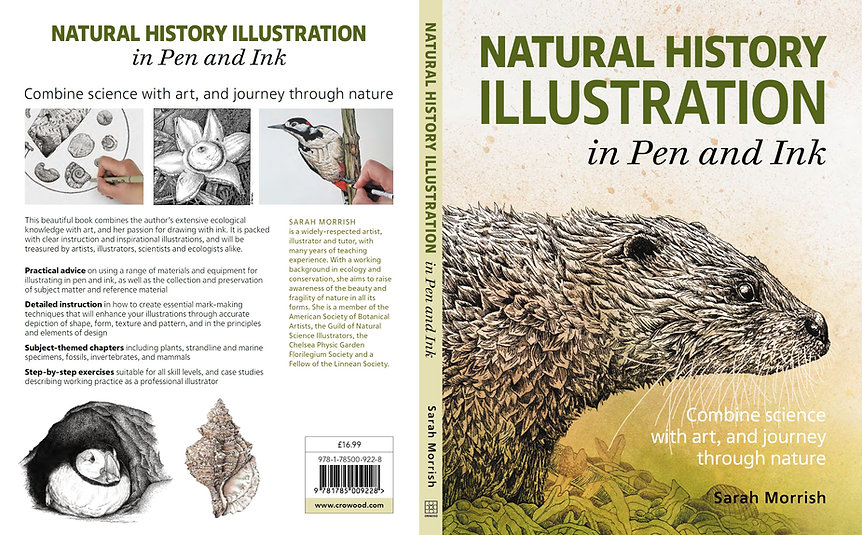 Natural History Illustration in Pen and Ink