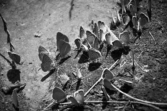 butterflies-6496054_1920_edited.jpg