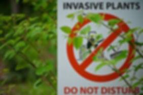 Invasive Plants.jpg