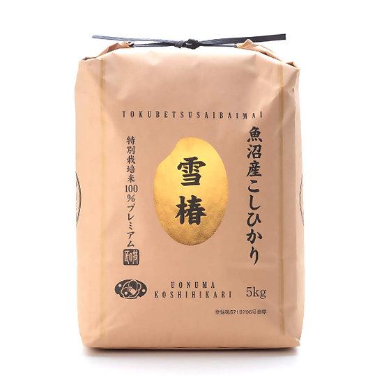 Japanese Extremely Rare , Ultra Premium, Uonuma, Yuki Tsubaki Koshihikari