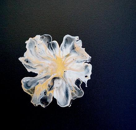 Carybdea Branchi