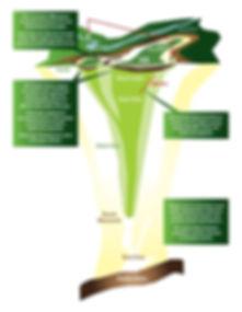 Carbonatite_Characteristics.jpg