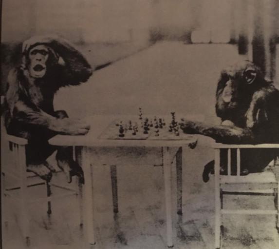 Monkey Chess.jpg