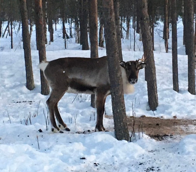 Welcome to Lapland