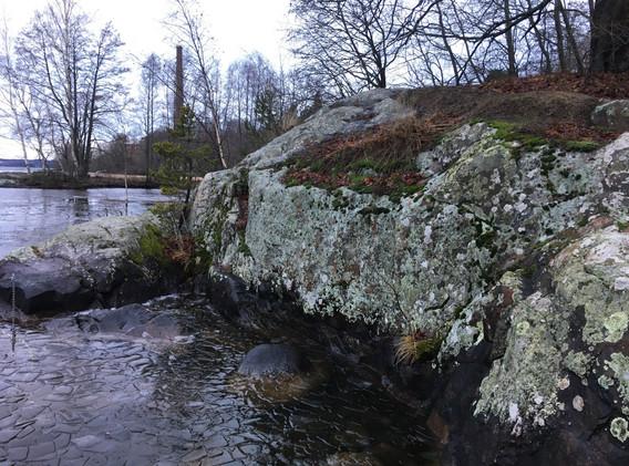 Lichen at Lake Pyhajarvi