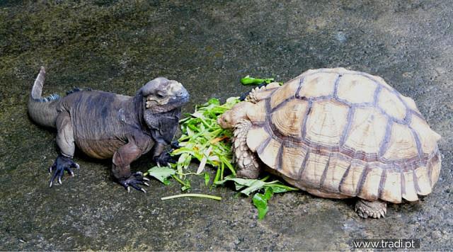 Zoo Singapore/ tradi.pt