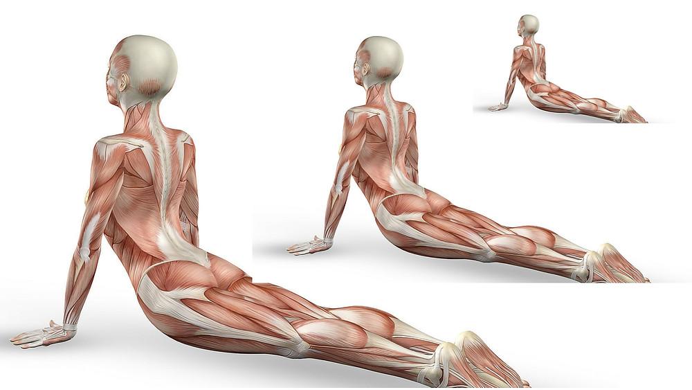 Yoga é uma terapia- Casa da Alma