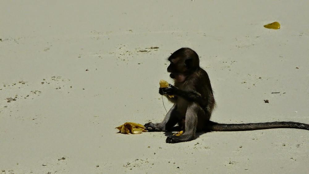 Ilha dos macacos Tailandia / tradi.pt