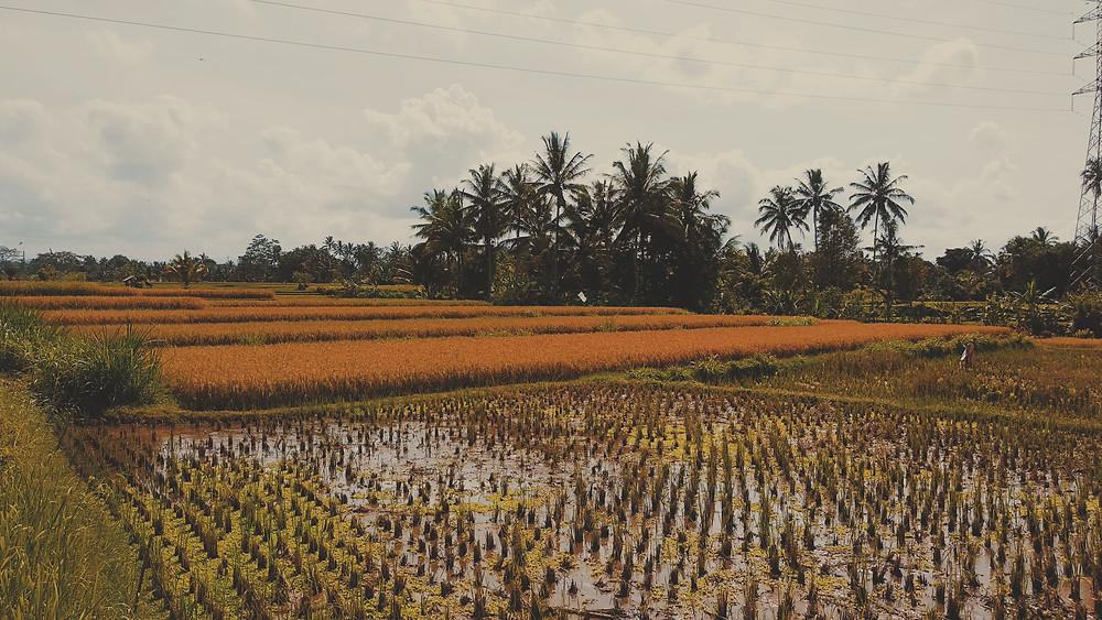 Casa da Alma - Bali 2019