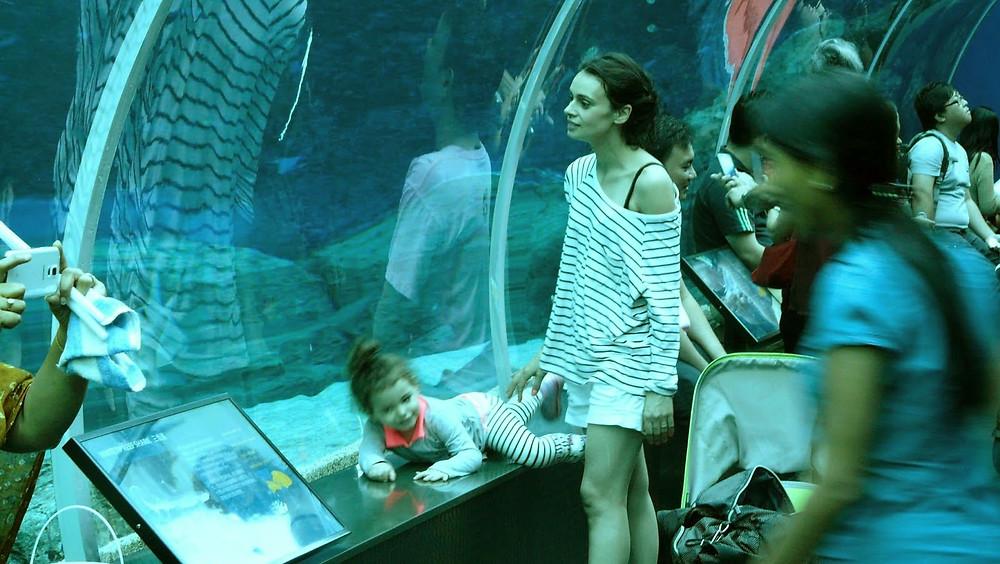 Aquarium Singapore / tradi.pt
