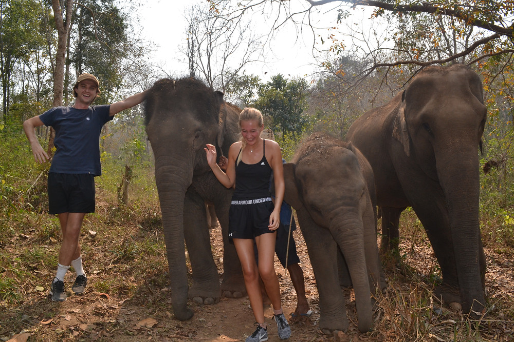 Travel blog - elephant trekking Thailand