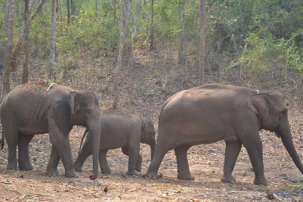 Travel blog - elephant trekking