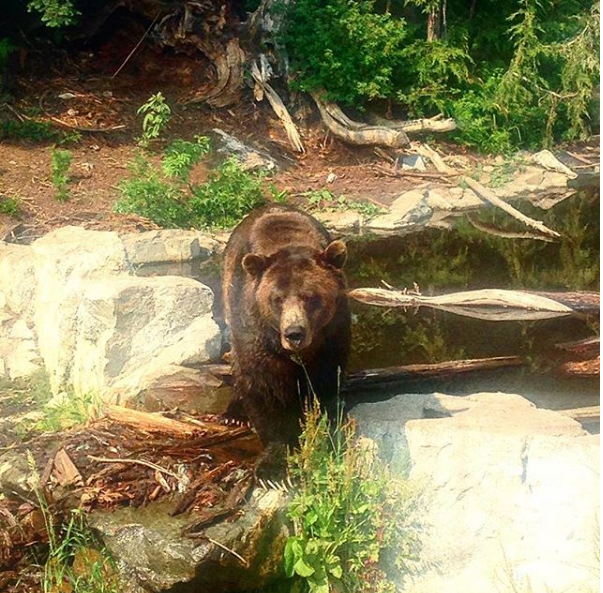Travel blog - grizzly bear