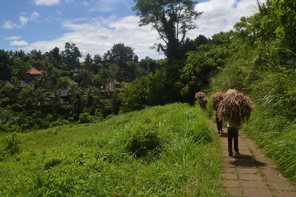 Travel blog - Ubud Bali