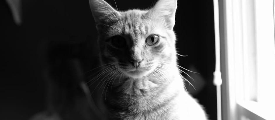 """Sound & Cats"""