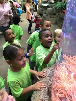 Preschool Students Field Trip