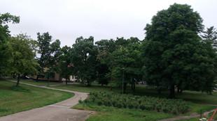 Park 5.jpg