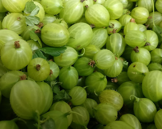 Gooseberries Barnstaple Organic 200g