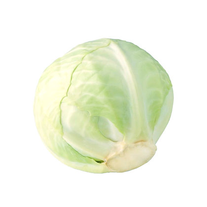 Cabbage White English