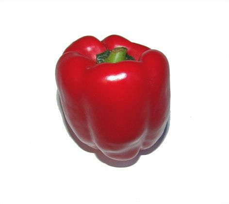 Pepper Red Dutch