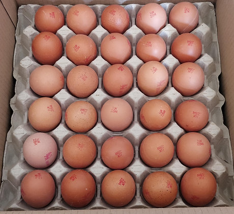 x60 Medium Free Range Eggs Box