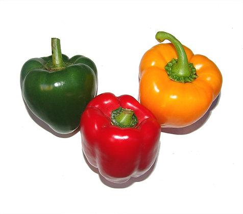 Pepper Tri Colour Dutch