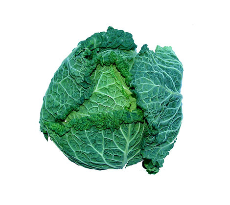 Cabbage Savoy English
