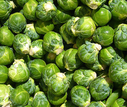 Sprouts English 500g