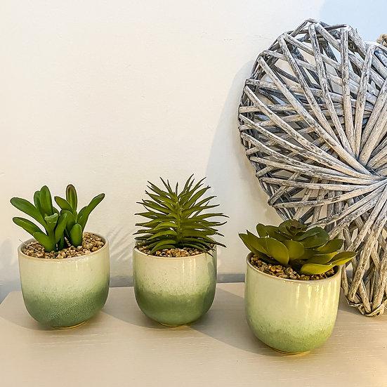Ceramic Potted Succulents - Set of 3