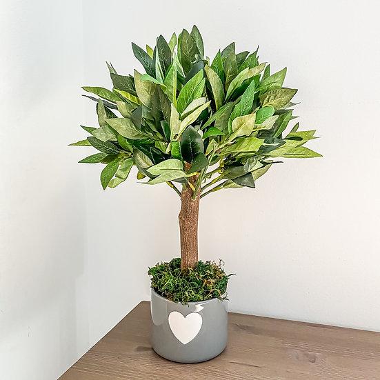 Bay Tree 40cm