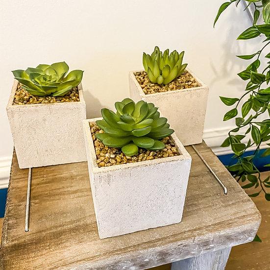 Set of 3 Stoneware Cube Succulents