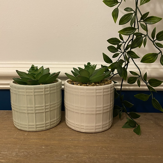 Textured Potted Succulents