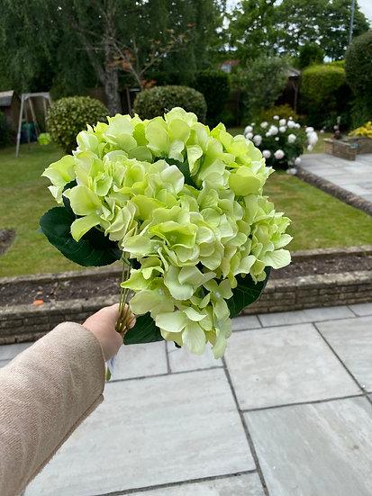Green Hydrangea Bunch