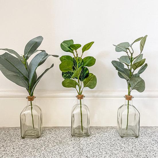 Trio of Bottled Plants