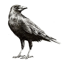 Crow Layer.png
