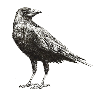 Crow%2520Layer_edited_edited.png
